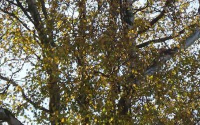 Die Reise durch den Lebensbaum